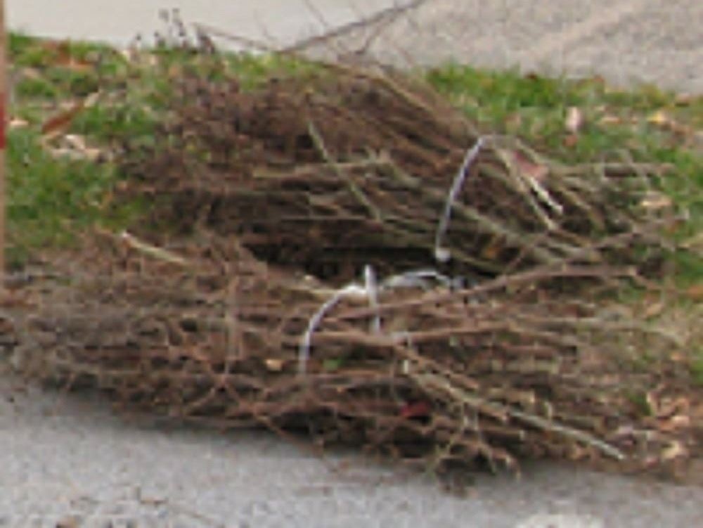 cut and bundled branches 03